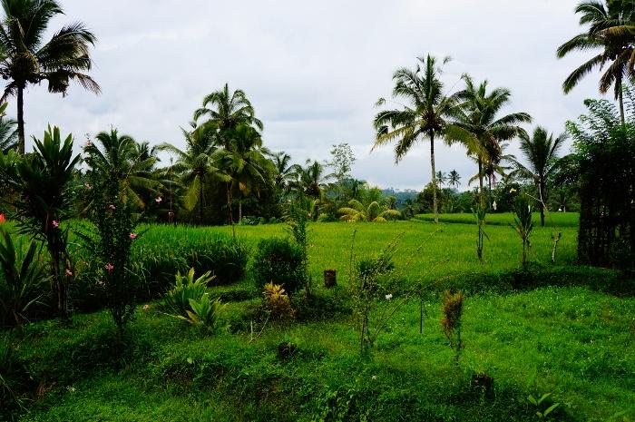Gunung Kawi (3)