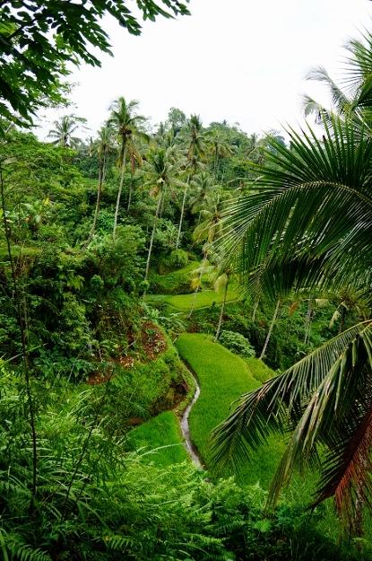Gunung Kawi (5)