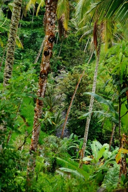 Gunung Kawi (6)