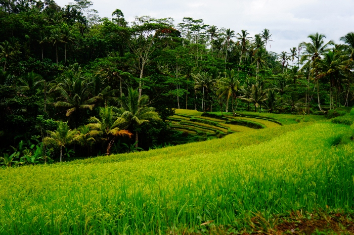 Gunung Kawi (9)